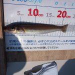 2017アルパマキス釣り大会☆