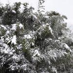 雪! 雪!! 雪!!!